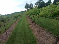 Picture of Crofut Family Winery & Vineyard